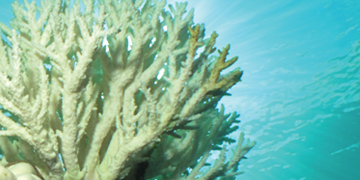 Studying Coral Bleaching Events with Mission: Water