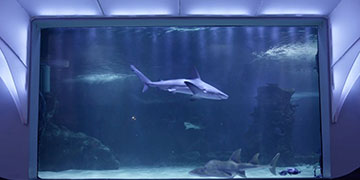 Continuous Water Quality Monitoring at Newport Aquarium Keeps the Sharks Happy