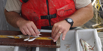 Great Lakes Fisheries Management | Lake Erie Surveys