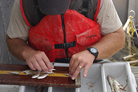 A630-Worker-with-Fish.jpg