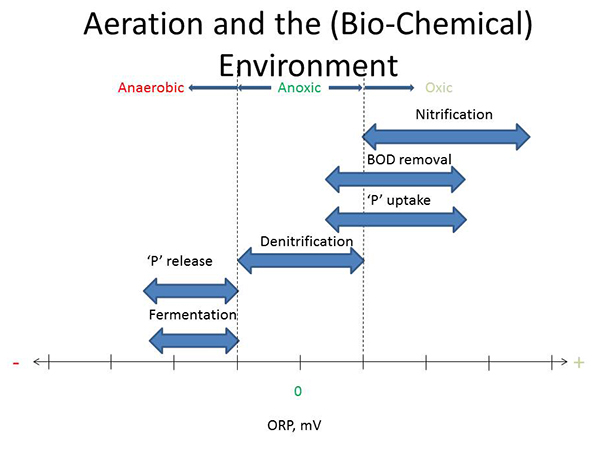 Activated-Sludge-Aeration-and-the-BioChemical-Environment.jpg