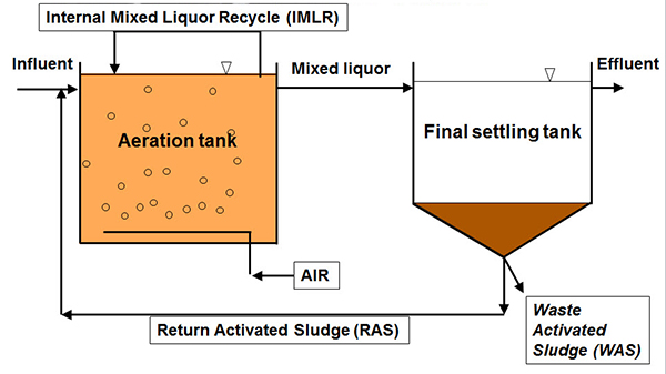 activated sludge process Activated sludge processes play the major role in biological wastewater  treatment through microbe-mediated conversion of biodegradable.