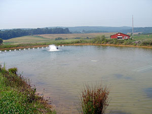 Aerator-in-Aquaculture-Pond.jpg