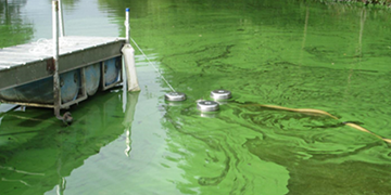 Harmful Algal Bloom Water Quality | Everything You Need To Know