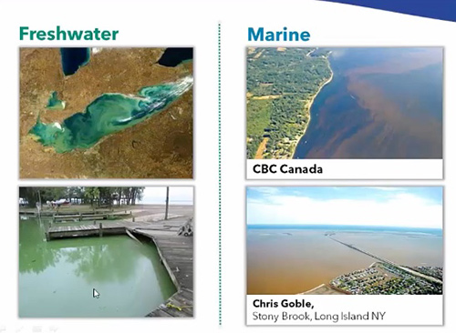 Monitoring For Harmful Algal Blooms: From Data To