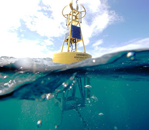 Monitoring-Coral-Reefs-in-the-Carribean-buoy.jpg