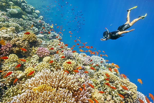 Snorkeling in the Red Sea | Ocean Acidification | YSI