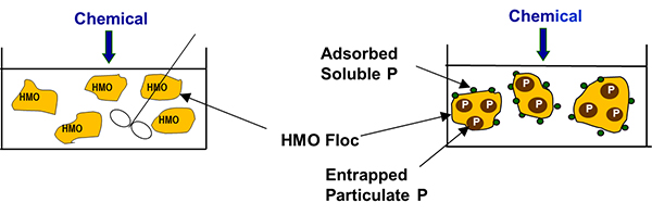 Phosphorus-Blog-HMO-Formation.jpg