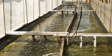 Aquaculture Raceway Shrimp Production with Dissolved Oxygen Monitoring