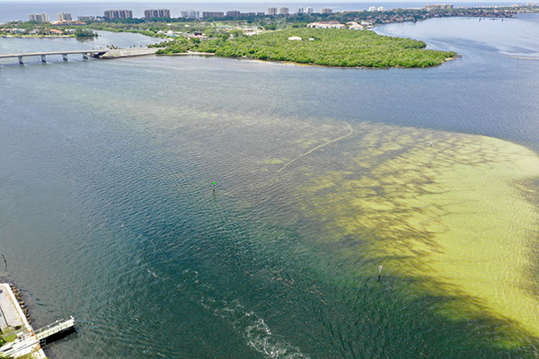 Top 5 Harmful Algal Bloom Questions Florida Red Tide | YSI