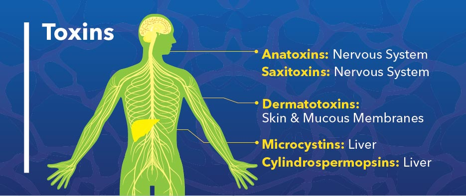 algae toxins