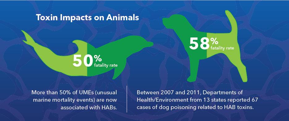 harmful algal blooms toxins