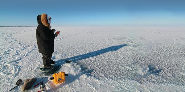600x300-blog-arctic-eider