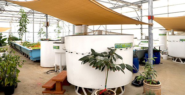 Oasis Aquaponics Uses YSI Products to Measure Temperature and Other Parameters