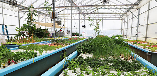 Oasis Aquaponics Facility Uses YSI Instruments to Prevent Crop Loss