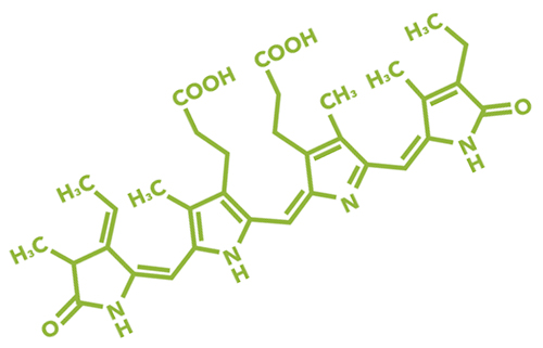 Are-You-Ready-for-HAB-Algae-Structure.jpg