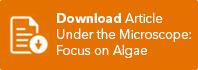 Button-Download-Focus-on-Algae.jpg