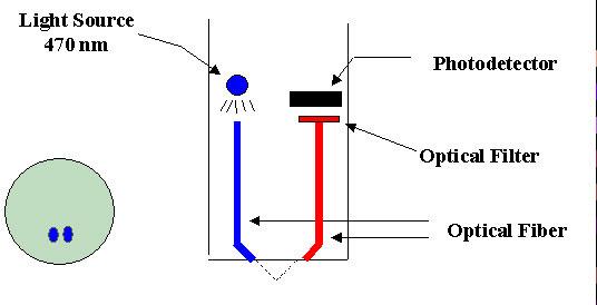 Chlorophyll-Probe-Diagram.jpg