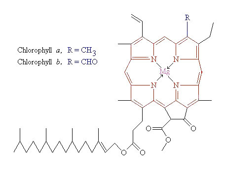Chlorophyll_Molecule.jpg
