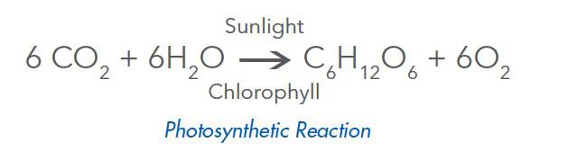 Chlorophyll_Reaction.jpg