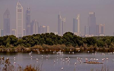 Dubai-Flamingoes-Ras-al-Khor-Wildlife-Sanctuary.jpg