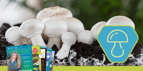 Alternatives to Plastic | Mushroom Packaging