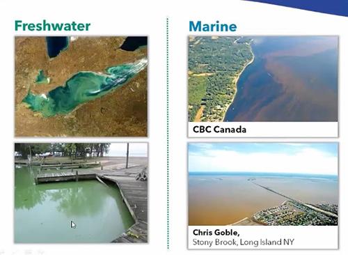 Harmful Algal Bloom Monitoring