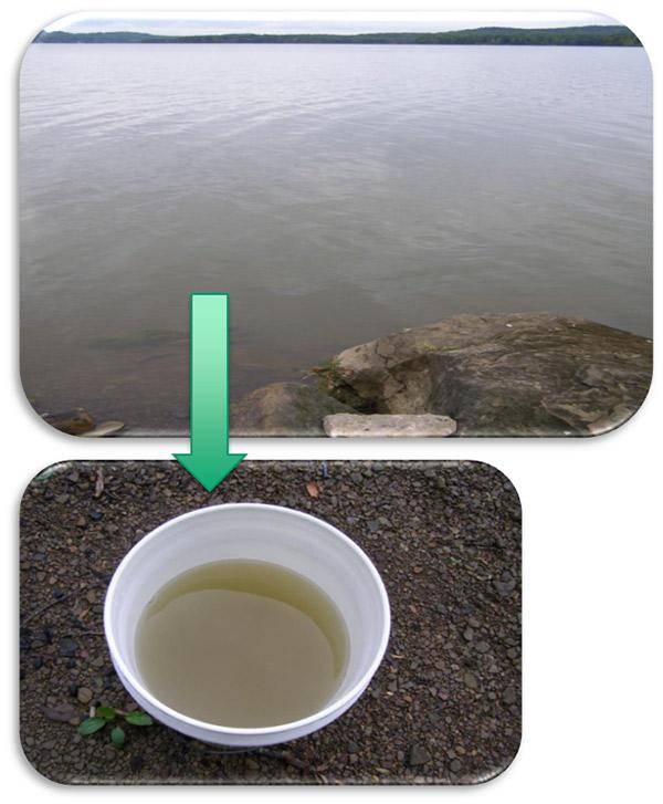 Harmful Algal Bloom Water Quality