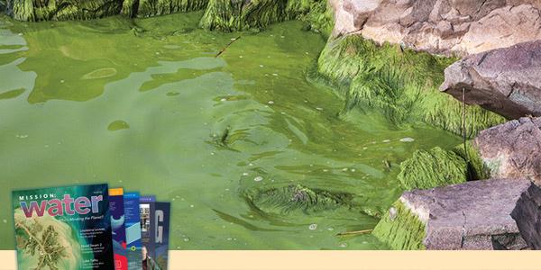 Lake Taihu Algae Along Shoreline