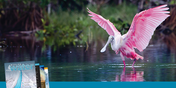 Miami-Sea-Level-1-Spoonbill.jpg