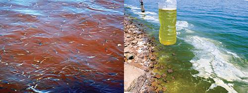 Mission-Water-CAFO-Fish-Kill-and-Algae.jpg