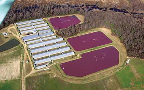 Mission-Water-CAFO-Waterkeeper-Alliance-Swine-Aerial.jpg