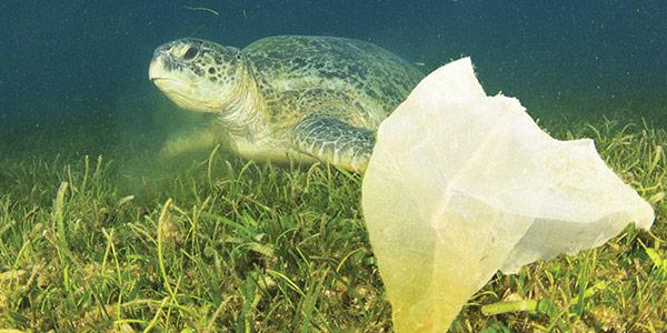 Mission-Water-Gyre-4-Turtle-Plastic.jpg