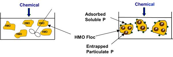 Phosphorus-Blog-HMO-Formation.jpg