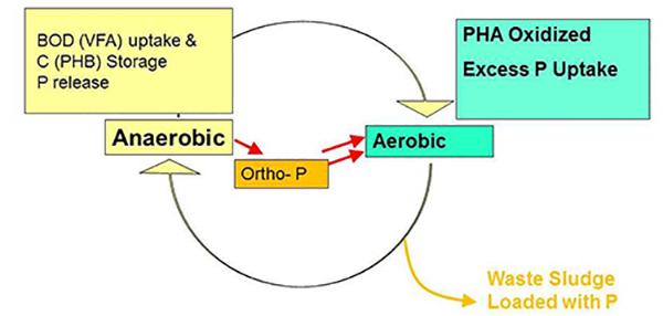 Phosphorus EBPR Figure