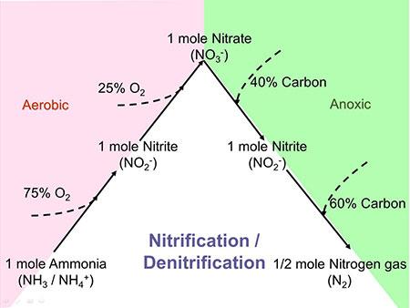 Nitrogen Removal