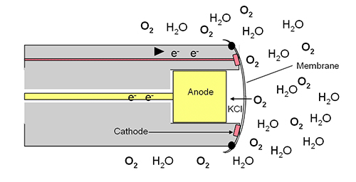 T605-Electrochemcial-DO-Sensor-with-Molecules.jpg