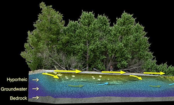 Thornton Creek Hyporheic Zone Graphic