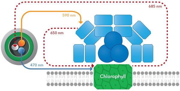 YSI TAL Chlorophyll