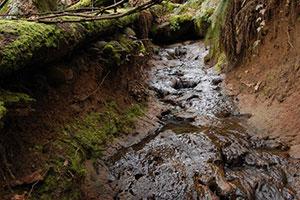 Tualatin-River-TMDL-Runoff.jpg