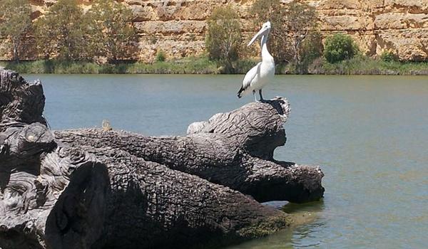 unsw-heron