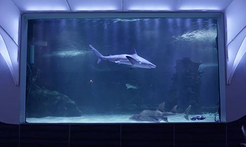 YSI-at-Newport-Shark-Exhibit.jpg