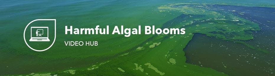 monitoring algae harmful algal blooms in water