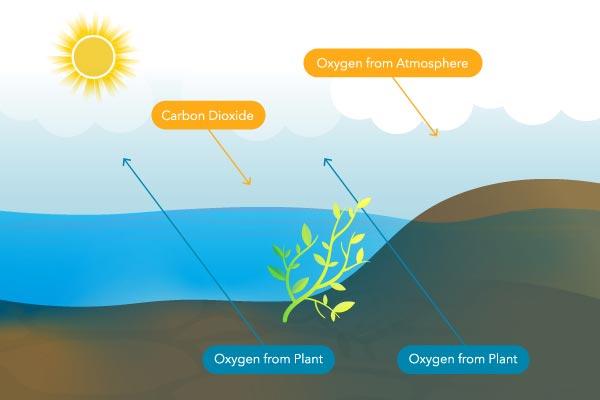 Dissolved Oxygen in Water