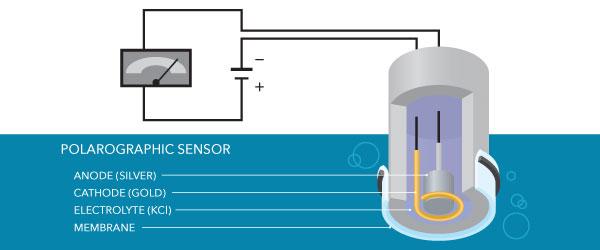 polarographic sensor dissolved oxygen meter